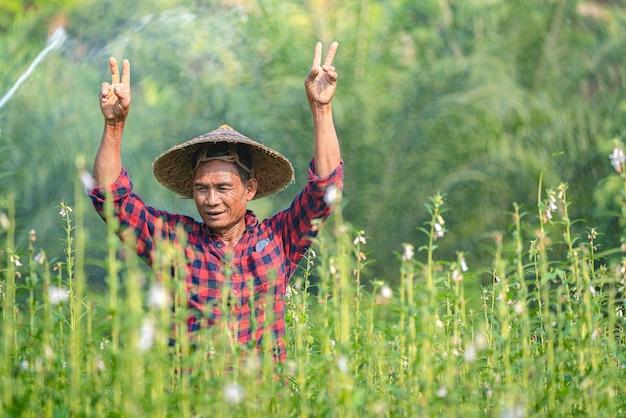 Portret szczęśliwy starszy azjatycki rolnik w sesame garden