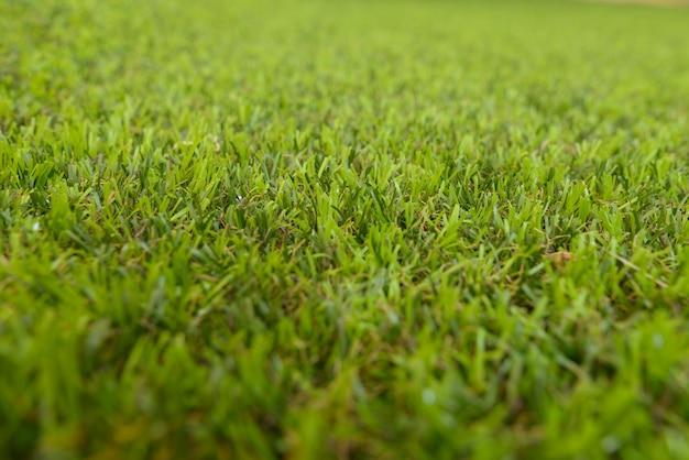 Portret tekstury tła zielona trawa z płytkiej głębi ostrości