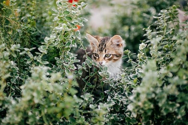 Portret urocza figlarka w lato zielonej trawie.