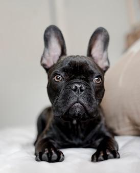 Portret urocza mała psinka