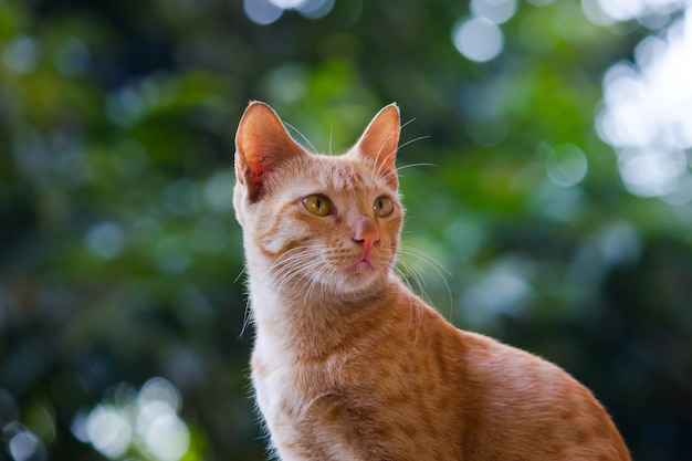 Portret uroczo wyglądającego kota z żółtymi oczami i wąsami ładne miękkie puszyste rasowe