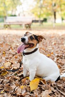 Portret uroczy pies w parku