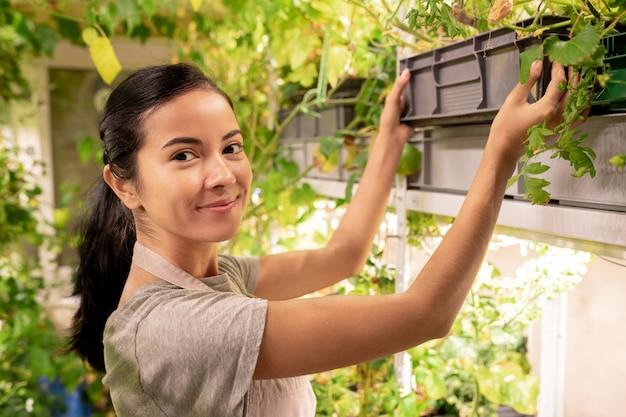 Portret uśmiechnięta atrakcyjna kobieta rasy mieszanej umieszczania wylewki w plastikowym pudełku w szklarni