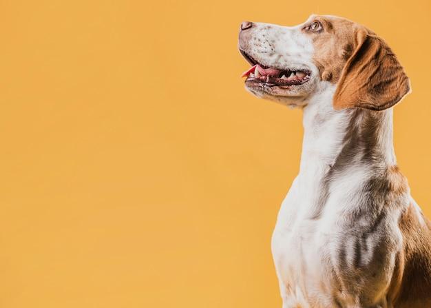 Portret uśmiechnięty psi patrzeć daleko od