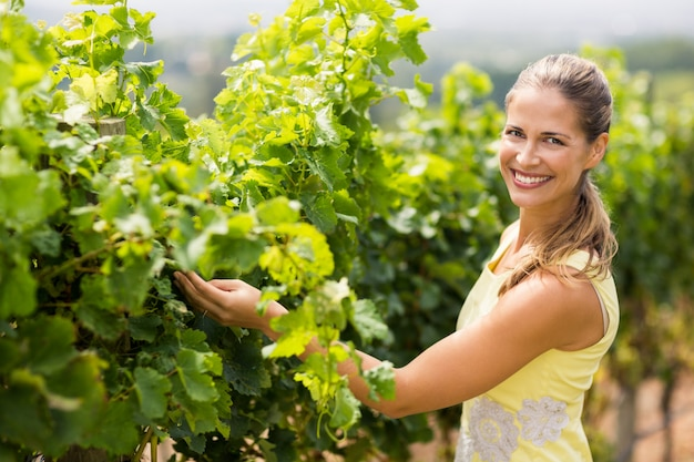 Portret uśmiechnięty żeński winiarz sprawdza sprawdzać gronowej uprawy