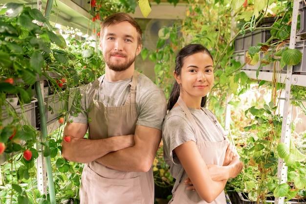 Portret uśmiechniętych, pewnie młodych rolniczych pracowników szklarni w fartuchach, stojących ze skrzyżowanymi rękami w wąskim przejściu