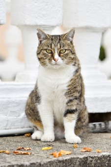 Portret zabawnego i bezczelnego kota, który prosi przechodniów o jedzenie