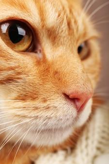 Portret zbliżenie czerwony kot