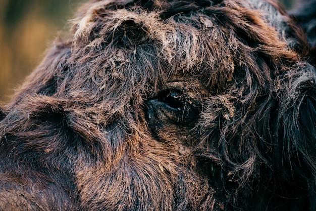 Portret zbliżenie jak mongolski