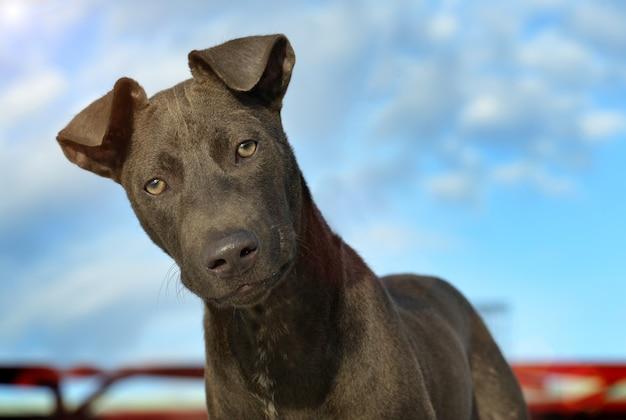 Portret zdziwiony uczuciem psa ulicy