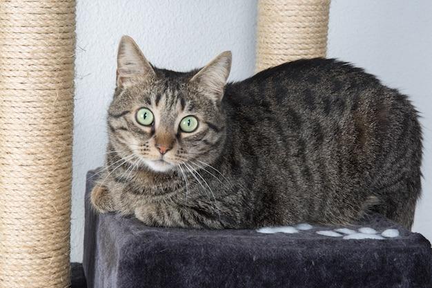 Portret zielonooki kot zaskakujący odizolowywającym na szarym tle
