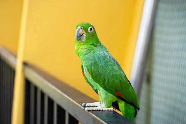 Portret zielony papuga szczegół. park ptaków, dzika przyroda