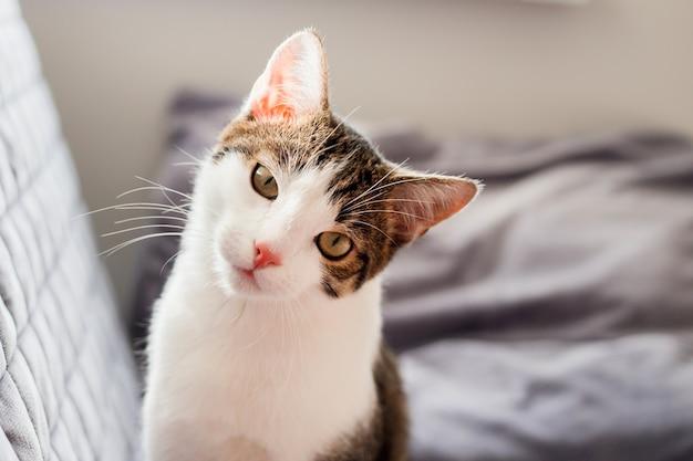 Portret złego bezpańskiego kota. kot wygląda złośliwie, z niedowierzaniem.