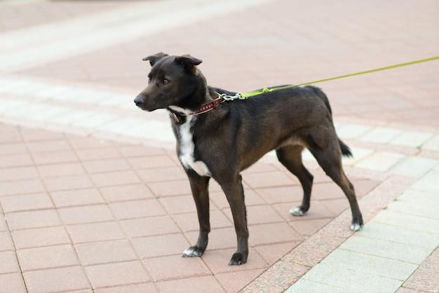 Portret zwierzęcia. czarny pies kundel