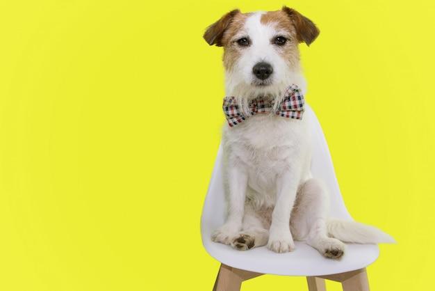 Portreta elegancki pies jest ubranym w kratkę rocznika bowtie świętuje urodziny lub karnawał.