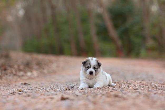 Portreta szczeniaka pies siedzi samotnie na glebowej drodze przy parkiem.
