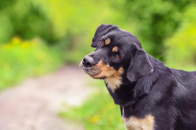 Portreta zakończenie pies na lecie outdoors