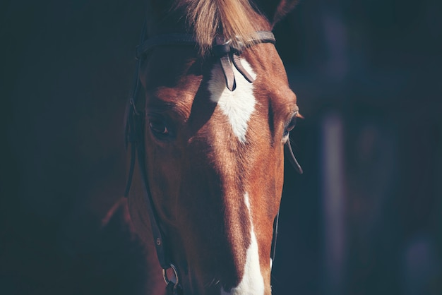 Portrety brązowego konia