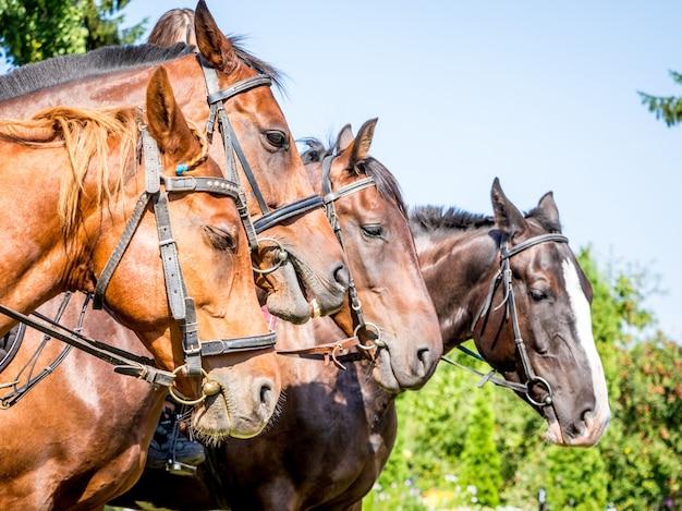 Portrety koni stojących w rzędzie w profilu zbliżenia