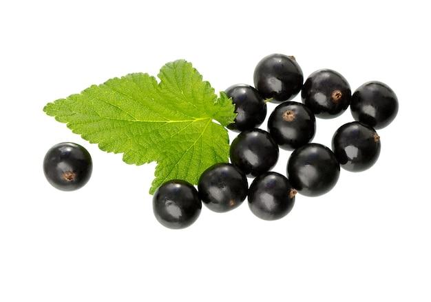 Porzeczka z zielonym liściem na białym tle. świeże czarne porzeczki jagodowe. oddział czarnej porzeczki.