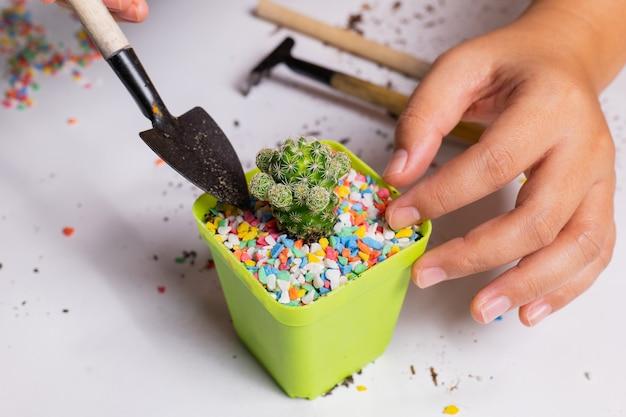 Posadź kaktus w małych doniczkach. dodaj kolorowe kamienie dla urody, powoli dodając kamienie.