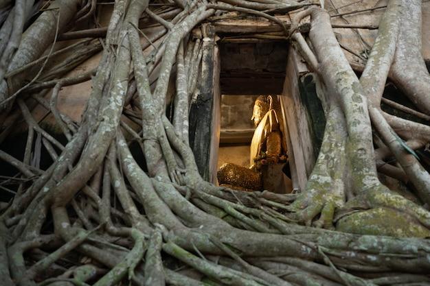 Posąg buddy w kościele pokrytym korzeniami drzew w świątyni bangkung w samut songkhram w tajlandii.