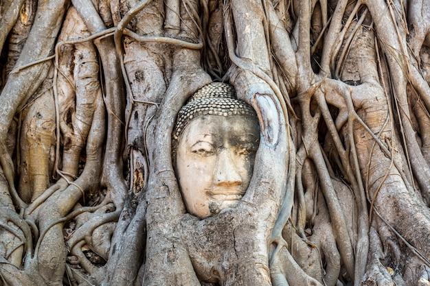 Posąg głowy buddy ayutthaya