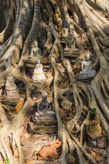 Posągi buddy na drzewie banyan