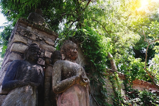 Posągi buddy ukryte w liściach tropikalnej dżungli z mgłą o poranku