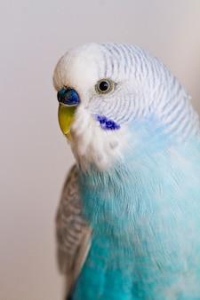 Pospolita papuga dla zwierząt domowych