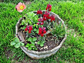 Pot z kwiatów