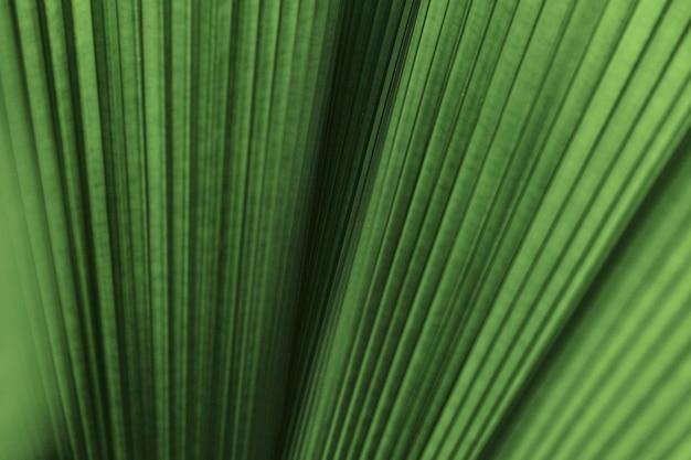 Potargane liście palmy w tle