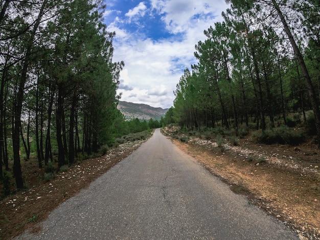 Pov jeżdżący samochodem po samotnej, starej, zakrzywionej drodze przez las sosnowy. jedź drogą nerpio w południowej europie, śródziemnomorski las sosnowy w hiszpanii.