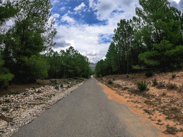 Pov jeżdżący samochodem po samotnej, starej, zakrzywionej drodze przez śródziemnomorski las sosnowy w albacete w hiszpanii, między urwiskiem a skalną ścianą. jedź drogą nerpio w południowej europie