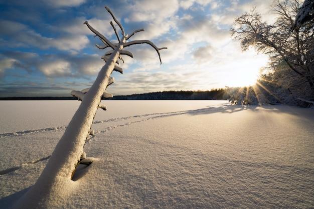 Powalone martwe drzewo w śniegu i światło słoneczne na zamarzniętym jeziorze.