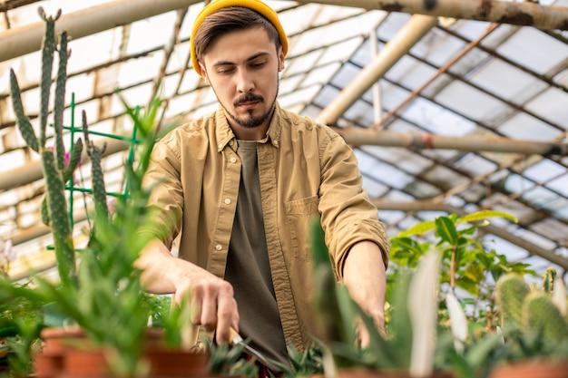 Poważny młody brodaty mężczyzna w czapce za pomocą małej kielni podczas nawożenia roślin w szklarni