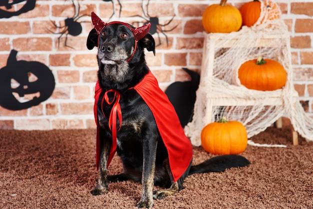 Poważny pies w stroju diabła