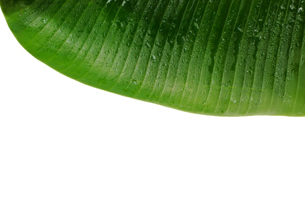 Powierzchnia i wzór liścia bananowca pozostaw wolną przestrzeń.
