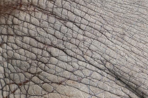 Powierzchnia słoń skóry skóry tło.