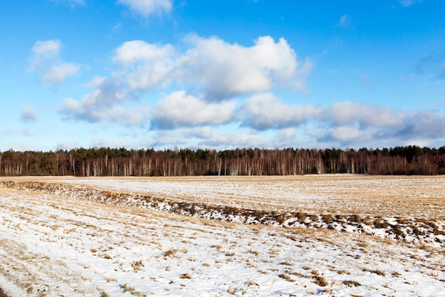 Powierzchnia śniegu na boisku. zdjęcie zostało zrobione z bliska zimą z niewielką głębią ostrości. na śniegu widoczne nierówności i dziury, a także rośliny. błękitne niebo w tle