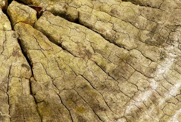 Powierzchnia starego drewna na naturalnym tle.
