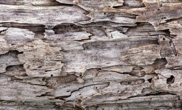 Powierzchnia starego drewna tekowego dla naturalnego tła, w płytkiej ostrości