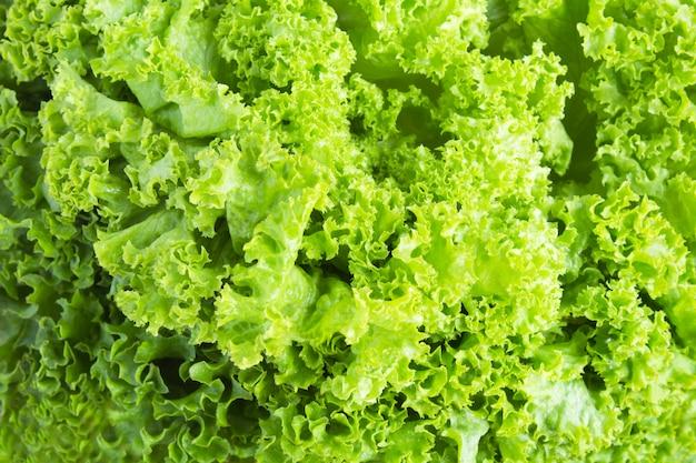 Powierzchnia warzyw. zielone liście sałaty. zbliżenie. widok z góry.