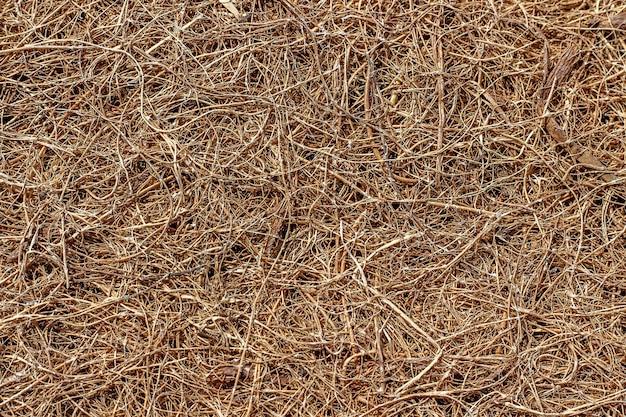 Powierzchnia włókna kokosowego. tekstura lub tło.