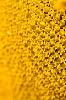 Powierzchnia żółty kwiat