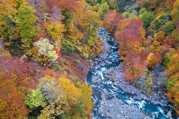Powietrzna jesień lasu rzeka japonia