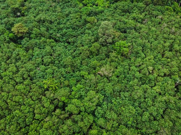 Powietrznego odgórnego widoku perspektywy zielonego liścia naturalny las w deszczu sezonie