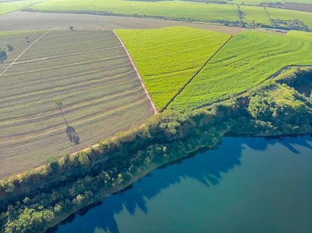 Powietrzny trzciny cukrowej pole w brazylia i pięknym jeziorze