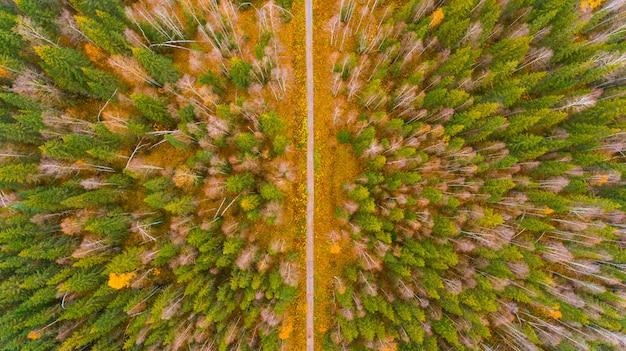 Powietrzny widok na las w czasie jesieni przy dobrej pogodzie
