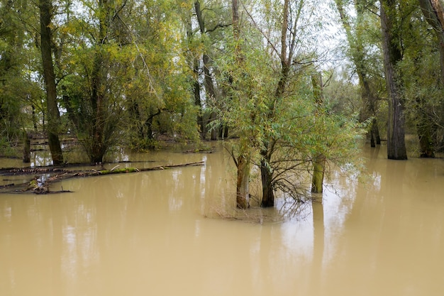 Powódź w lesie i stojąca brudna woda
